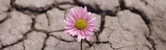 Características de la persona resiliente